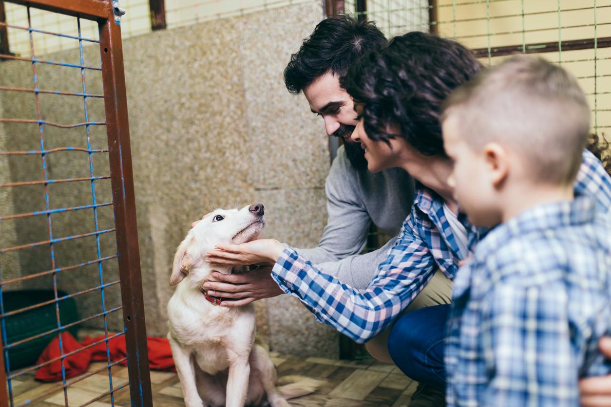 Understanding Animal Adoption through Data Science